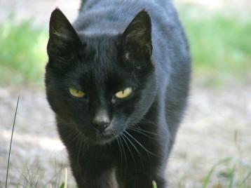 Katze Minni, März 2014