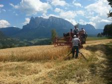 Filmaufnahme bei der Getreideernte für die RAI, 2013