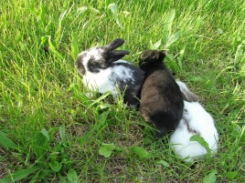 Unsere Kaninchen, Juni 2015