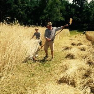 Getreideernte, Sommer 2015